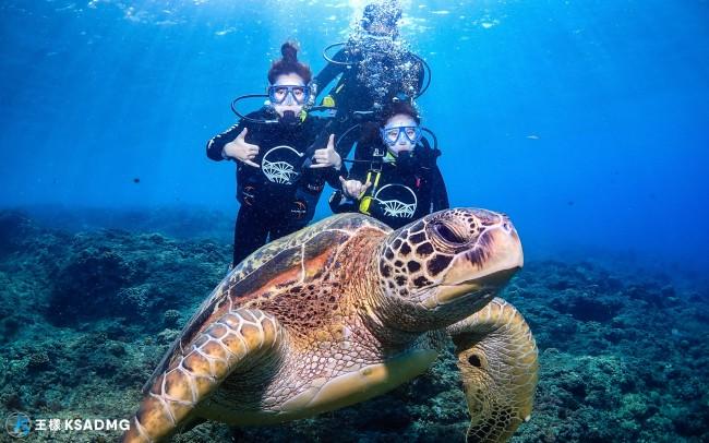 【潛水】悠游小琉球秘境水下世界,海龜伴游奇幻旅程