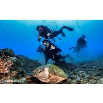 【潛水】墾丁外海船潛體驗,深度徜徉南灣海洋世界!