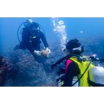 【潛水】海面下的世界.東北鼻頭角潛水半日體驗